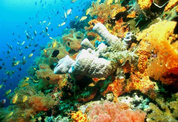 coral reef in Moalboal